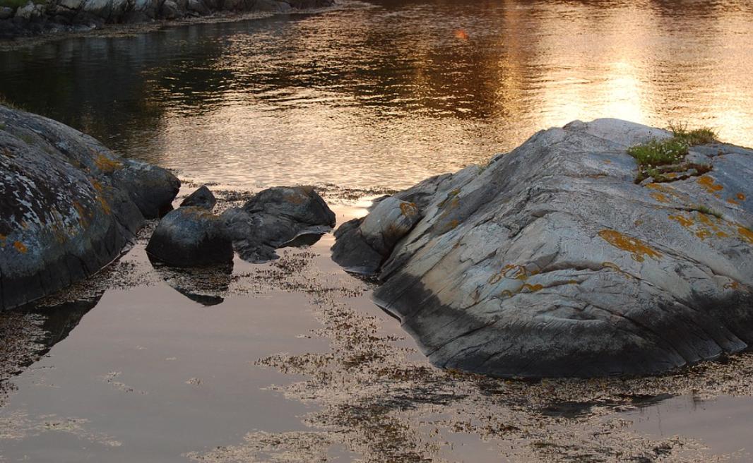 kelpa ve vodě